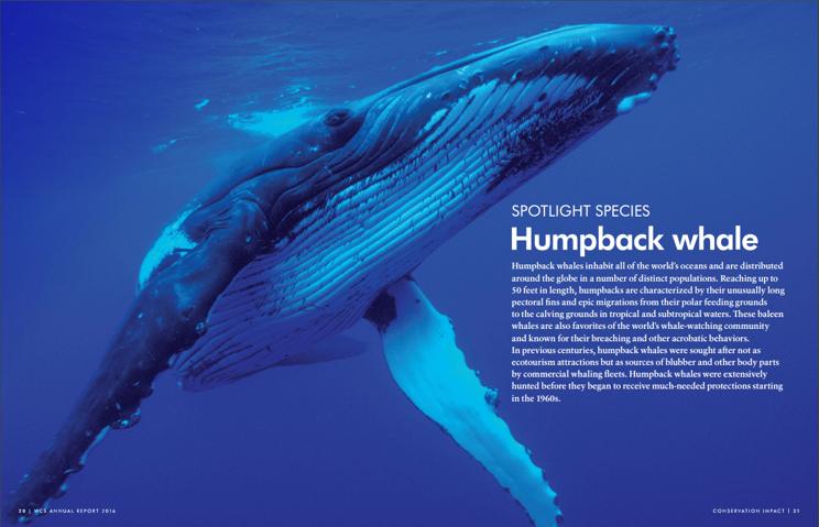 A photo of a humpback whale.