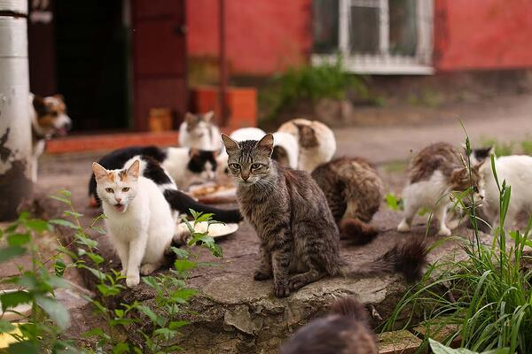 Photo of a large group of homeless street cats.